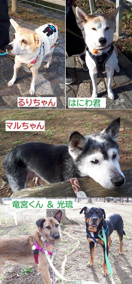 お散歩会.jpg