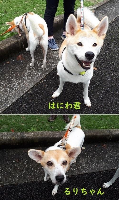 お散歩会1.jpg
