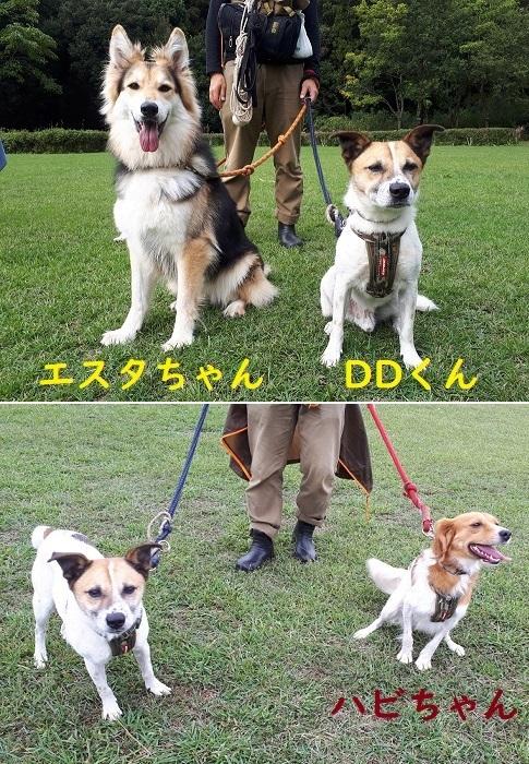 お散歩会2.jpg