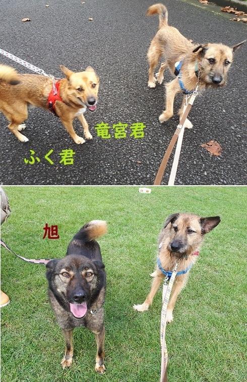 お散歩会3.jpg
