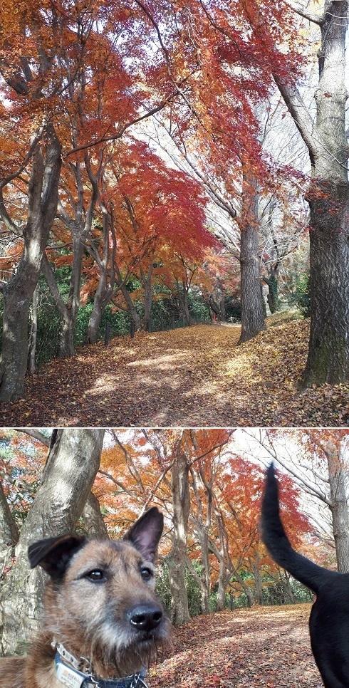 お散歩会4.jpg